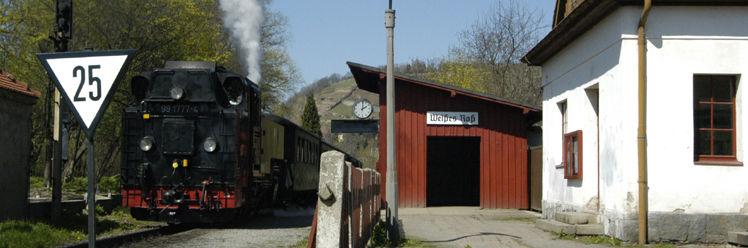 Lößnitzdackel Radebeul